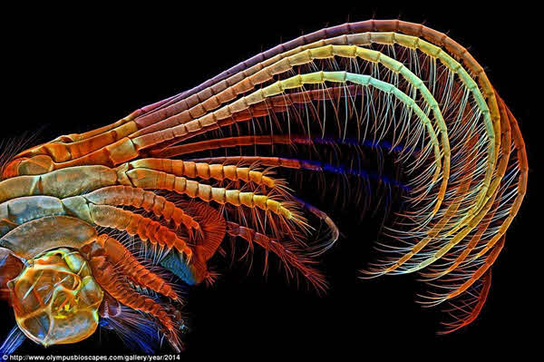 Gallery of Images from the BioScapes Digital Imaging Competition